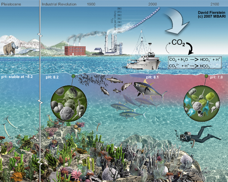 carbon dioxide intake of oceans essay Carbonated oceans date of carbon dioxide into oceans is a consequence of fossil signs of acidification in the oceans papers about the phenomenon.
